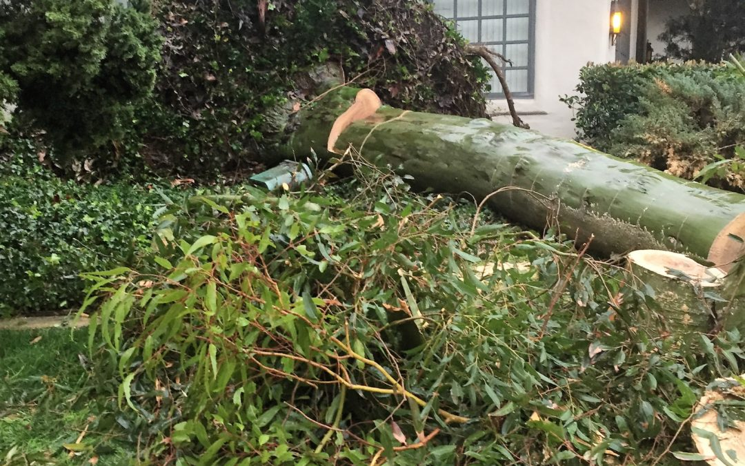 Does My Homeowners Insurance Cover My Landscaping?